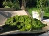 Maschinenring Teichbau: Unmenge von Algen
