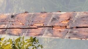 Brückenunterlattung einer Maschinenring-Brücke